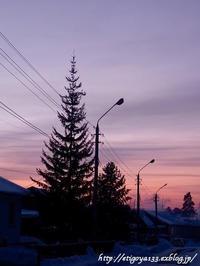 シベリアの赤松は綺麗だねー - 丁寧な生活をゆっくりと2