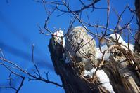野鳥観察 エゾフクロウ - ノラニンジンの咲く庭