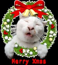 Merry Xmas - ぶつぶつ独り言2(うちの猫ら2016)