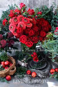 I wish you a Merry Christmas!!! - LIVING PHOTO