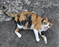 今まで出会った猫たち6 - 自然の写真帖