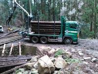 山仕事三昧の三連休 - 自伐林業 施業日記