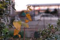 寒い夕方 - pottering