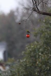 柿の実ひとつ Ⅱ - Windpath