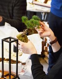 新春を迎える苔玉 盆栽 - Kitowaの日々
