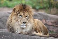 天王寺のライオンとピューマ - 動物園放浪記