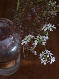 コリアンダー - 暮らしと植物のブログ