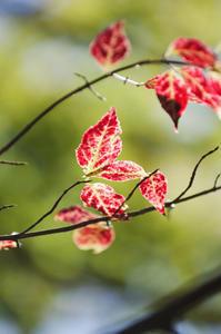 紅い葉 その2 - 花と風景 Photo blog