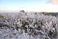 部分的によかった大川嶺の霧氷 - 軟弱足 の山歩き
