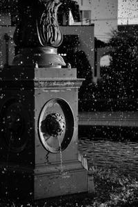water drops - S w a m p y D o g - my laidback life