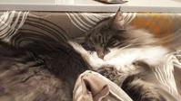 ご報告 - 猫に目薬