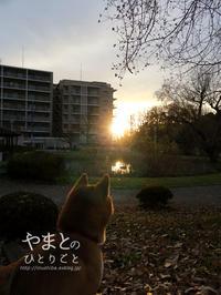 犬の散歩deリース作り - yamatoのひとりごと