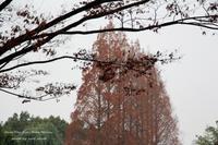 冬景色 ~心色 - 静かな時間