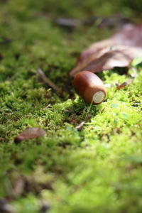 苔とドングリ - 平凡な日々の中で
