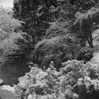 この冬初めて雪が積もった日#1。 - SunsetLine