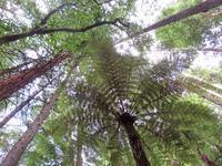 ロトルアの夏、自然の夏 - いい旅・夢Kiwi スカイキウィの夢日記