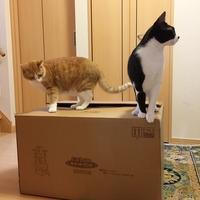 猫達へのクリスマスプレゼント - のんた君といっしょ
