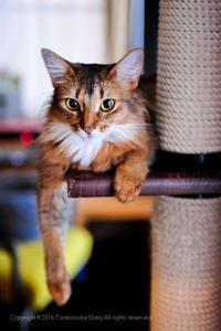 門前の小猫(1歳1か月(ΦωΦ))習わぬ経を… - とら之輔日記