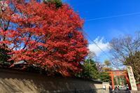 紅葉の京都 旧三井家下鴨別邸 - ぴんぼけふぉとぶろぐ2