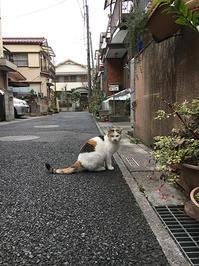 kachimo食堂 - ぶつぶつ独り言2(うちの猫ら2016)