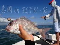 真鯛 on FLY-61-63 - 豪州毛鉤釣師