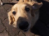 ルビちゃんの、可愛いミニチュアダックスの友達。 - イタグレ ルビーの日記  Ruby Tuesday