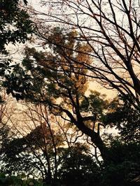 山手の家 12.23 - Healing Garden  ー草庭ー