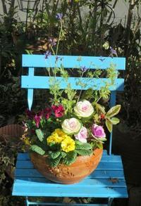 ちょっと心配な寄せ植え - ひだまりの庭 ~ヒネモスノタリ~