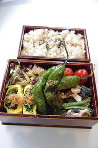 最近のお弁当 (くらし部門) - ローズ家の台所