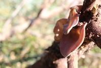 年の瀬 - 週刊「目指せ自然農で自給自足」