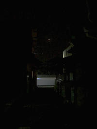 宵の明星と晩白柚(ばんぺいゆ) - マリカの野草画帖