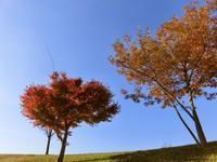 12/3、NC700Sで紅葉の茅ヶ崎里山公園を散歩 - 某の雑記帳