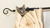 カーテンのぼり - 猫と夕焼け