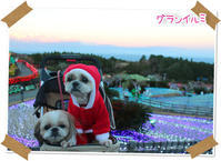 2016年12月23日 伊豆 グランイルミ(動物・ペット部門) - 週末は、愛犬モモと永吉とお出かけ!Kimi's Eye