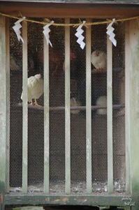 天理市石上神宮 そして何事も無く一日が始まる - ぶらり記録(写真) 奈良・大阪・・・