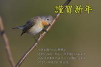 新年の御挨拶 - 奥武蔵の自然