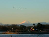 富士山・ハクチョウ・多々良沼の朝 - 『私のデジタル写真眼』