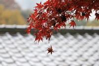 #0062 香嵐渓と飯盛山 - 猫とインコと日々のこと