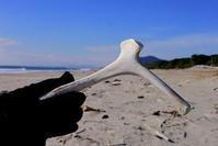 アカウミガメ - Beachcomber's Logbook