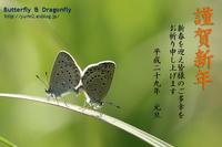謹賀新年 2017 - Butterfly & Dragonfly
