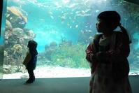 水族館おさめ - カメラと過ごす時間