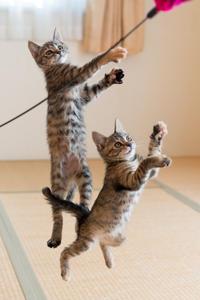 ダブルでジャンプ - 猫と夕焼け
