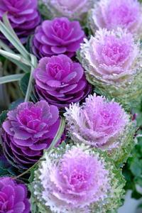 Purple - meno mosso
