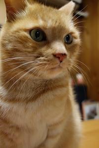 平成肉球福来るねん 元旦 - 猫イズム