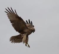 酉年 - TACOSの野鳥日記