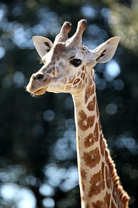 「ナツコ」とサバンナの仲間たち - 動物園放浪記