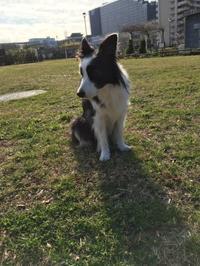 年末年始 - 犬とお散歩