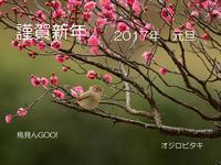 あけましておめでとうございます…オジロビタキ。 - 鳥見んGOO!(とりみんぐー!)野鳥との出逢い