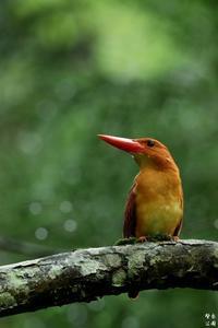 赤い鳥の思いで - 野鳥公園