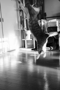 とべとべとべ - ぎんネコ☆はうす